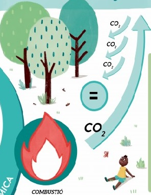 Recursos per treballar la biomassa, una font d'energia renovable i de proximitat