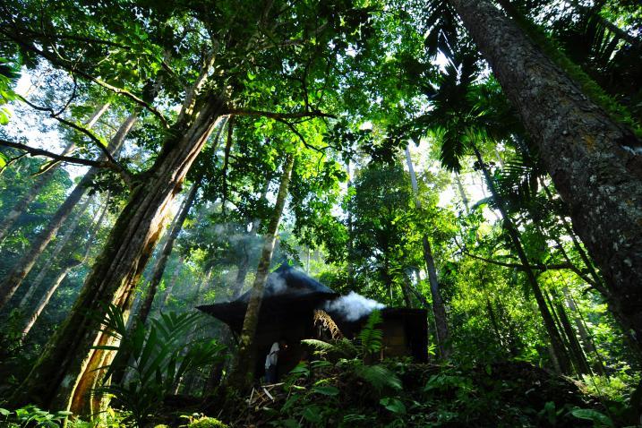 Recursos per al Dia Mundial de la Vida Silvestre (3 de març)